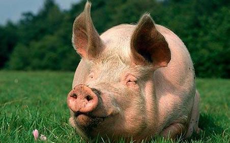 关于进一步做好当前生猪规模养殖环评管理相关工作的通知